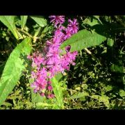 Anderson Gems:  Withrow Nature Preserve